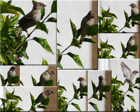 birdwatches-fromhibiscus